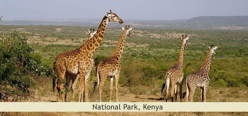 National Park, Kenya