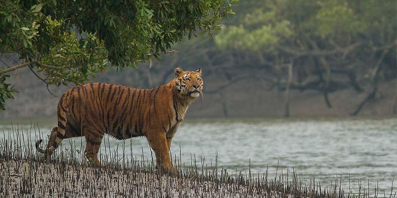 Sundarbans Weekend Gataway